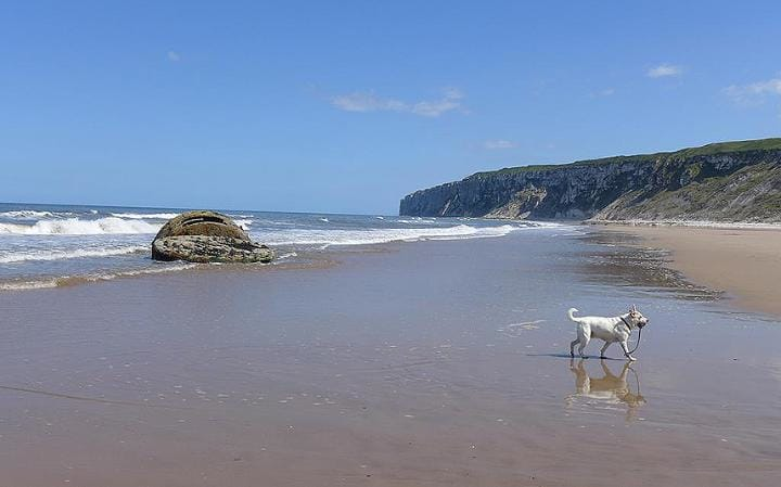 dog walks on a sunny beach at Filey
